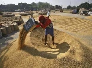 Punjab pays record Rs.15,473 crore to farmers for wheat